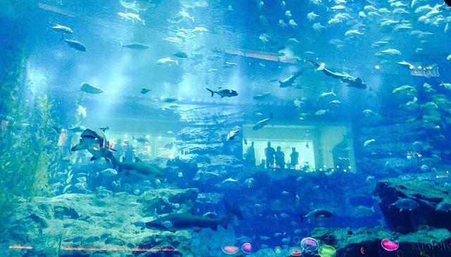 Podmořské akvárium